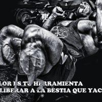 frases de gym motivadoras_43