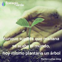 frases de motivacion para cuidar el medio ambiente 1